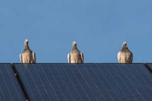 Tips to protect residential solar panels from birds