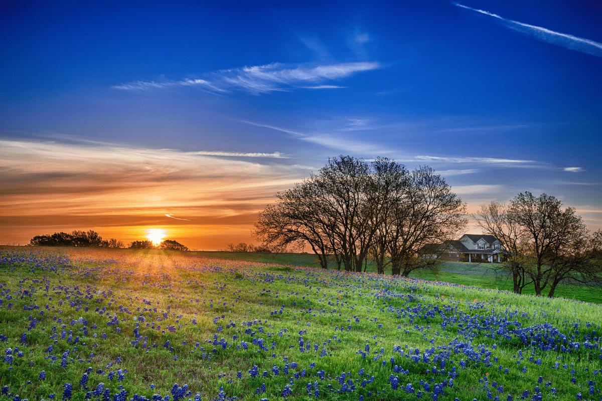 texas solar panel installation costs